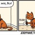 Los gatos odian el agua