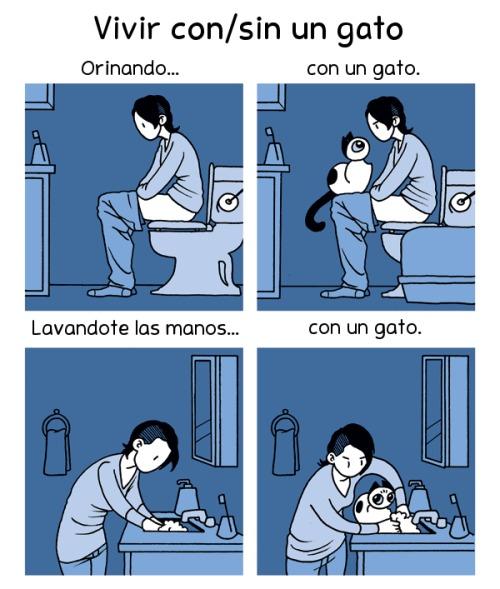 Con un gato