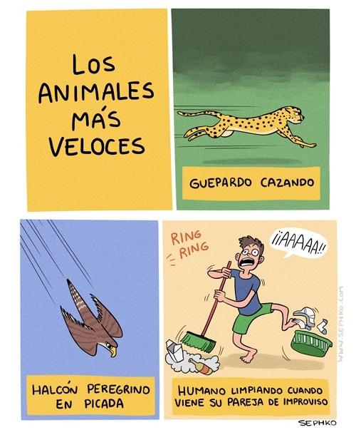 Los animales mas veloces