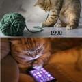 Los gatos tambien estan perdiendo su vida