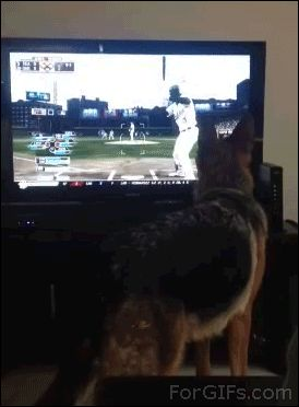 No es bueno que los perros vean television
