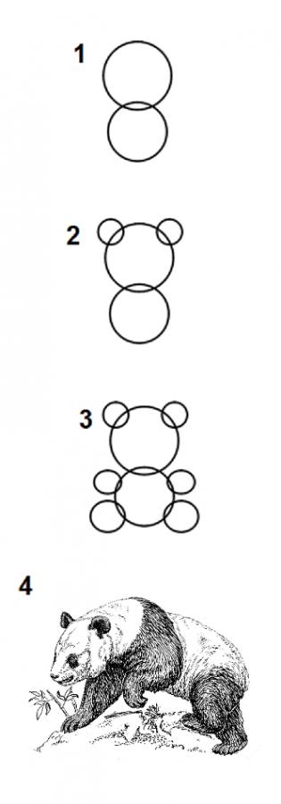 como dibujar un osos