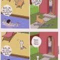 diferentecias entre perros y gatos