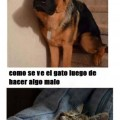 El gato es una descarado