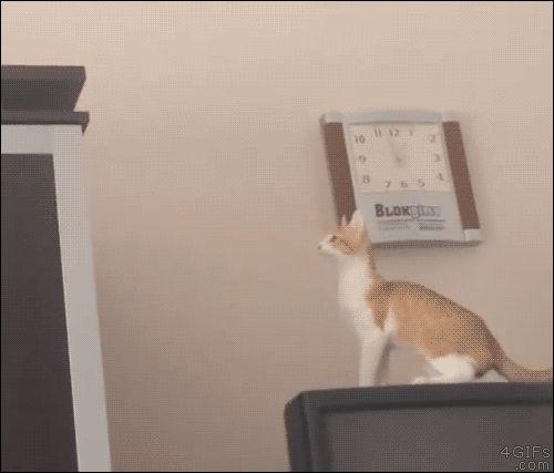 El mejor salto de un gato