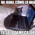 Los gatos solo quieren resultados