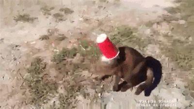 Nueva raza de gatos