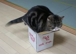 Trampa universal de gatos
