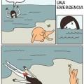 Gatos durante una emergencia