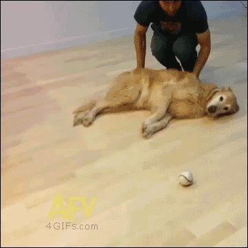 Un perro muy flojo