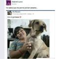 Un perro poniendo estados de facebook