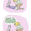 la curiosidad de los gatos