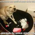 Amor por tu mascota