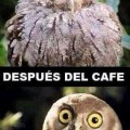 Antes y despues de un cafe