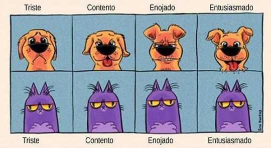 Expresiones de gatos vs perros