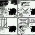 Animales invadiendo ciudades