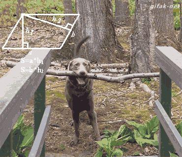 El perro que sabia fisica