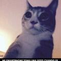 El vinculo entre los gatos y telefonos inteligentes