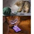 Gatos y su evolucion