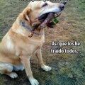Lo simple de la vida de los perros
