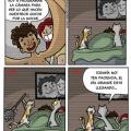Que hacen los gatos por la noche