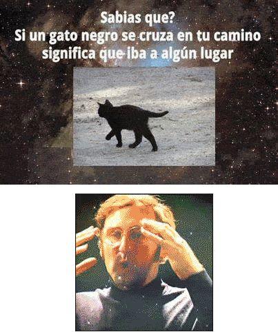 Un gato negro en tu cmaino