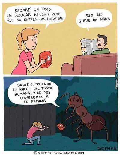 Como hacer que no ingresen las hormigas