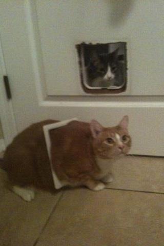Creo que mi gato esta ganando peso