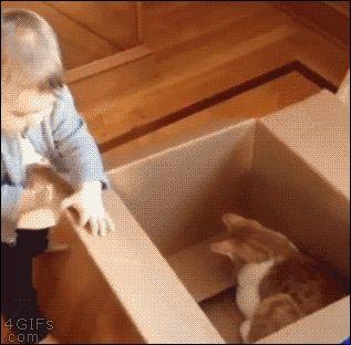 El bebe enfrentadose al nuevo gato