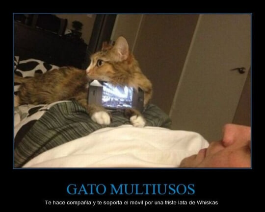 Gatos multiusos