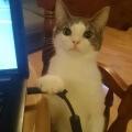 Prueba de que el gato es malvado