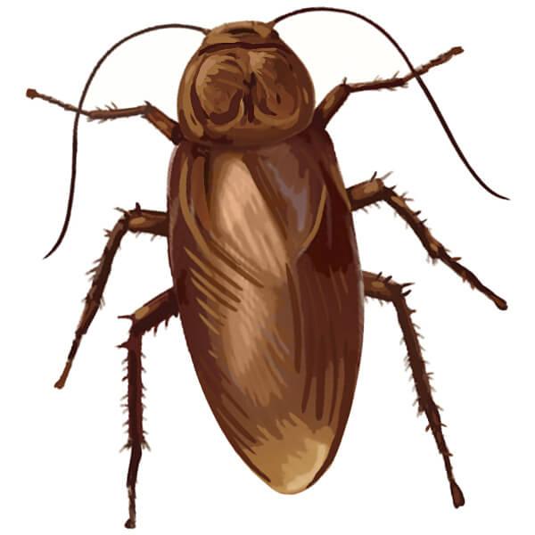 cockroach_emoji