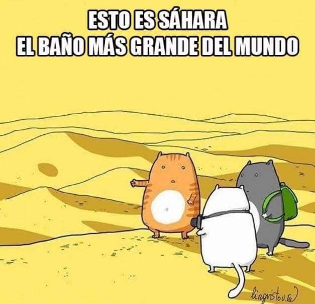 El sahara visto desde la mirada de in gato