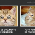 Foto de documento de identidad vs facebook