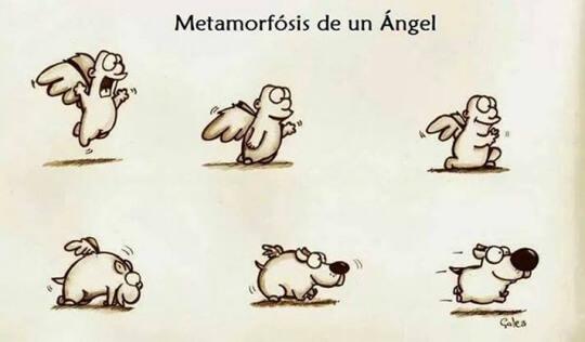 La metamorfosis de los angeles