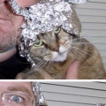 Las mascotas suelen ser como sus dueños