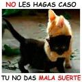 Los gatos negros no dan mala suerte