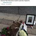 La historia del mapache ahora en español