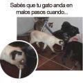 Como saber que tu gato anda en malos pasos