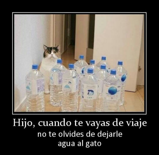 Cuando viajes no te olvides de dejar agua a tu mascota