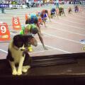 El gato que queria ser corredor olimpico