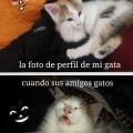 La gata que tenia facebook