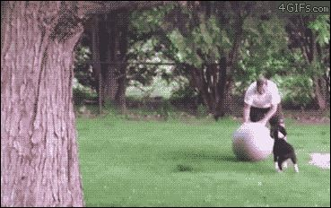 Perro vs pelota de yoga