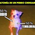 Anamotia de un chihuahua