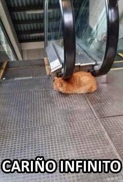 Cariño infinito nivel gato