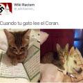 Cuando tu gato lee el coran