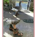 De los creadores del gato con botas