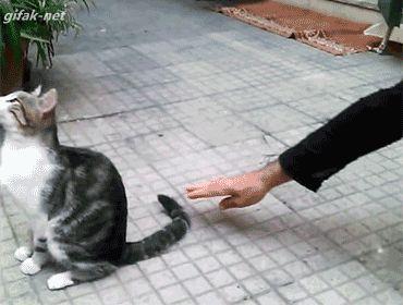 El gato que merece un oscar