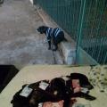 El perrito que cambio su vida