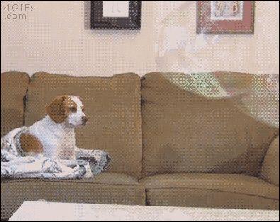El perro que no se impresionaba con nada
